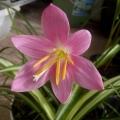 阳台上的花卉