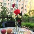 玫瑰月季专区