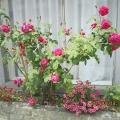 2014春季的花花