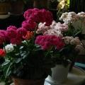 我的长寿花