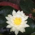 我的花园我的花