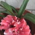 我家的花儿们