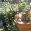 我的花园改造