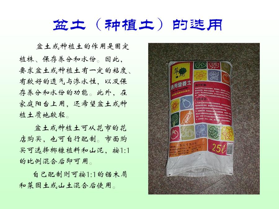 三角梅的欣赏与家庭种植 (44).jpg