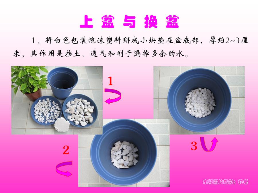 三角梅的欣赏与家庭种植 (47).jpg