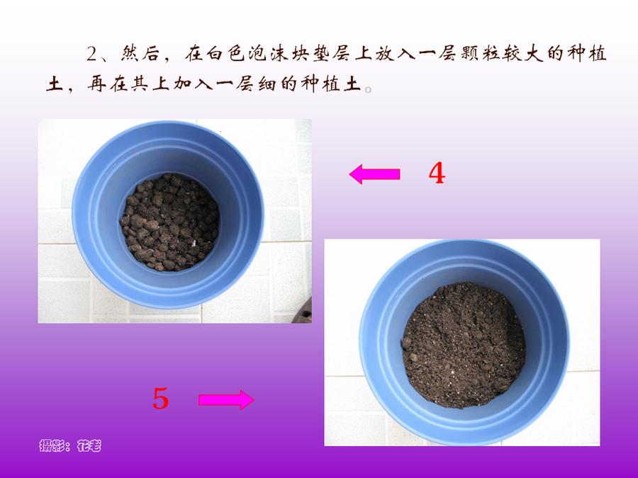 三角梅的欣赏与家庭种植 (48).jpg