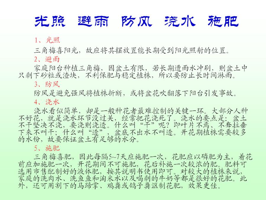 三角梅的欣赏与家庭种植 (50).jpg