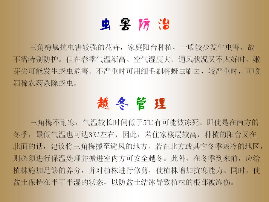 三角梅的欣赏与家庭种植 (56).jpg
