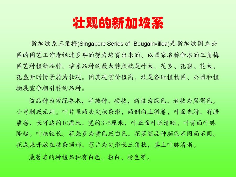 三角梅的欣赏与家庭种植 (65).jpg