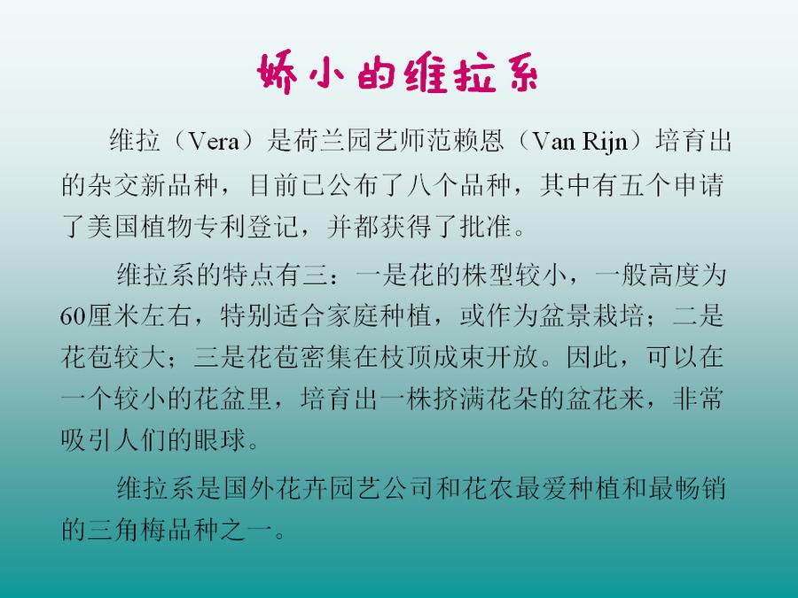 三角梅的欣赏与家庭种植 (79).jpg