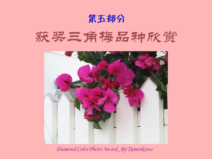 三角梅的欣赏与家庭种植 (116).jpg
