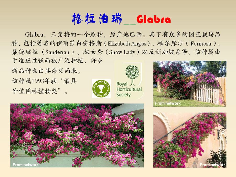 三角梅的欣赏与家庭种植 (118).jpg