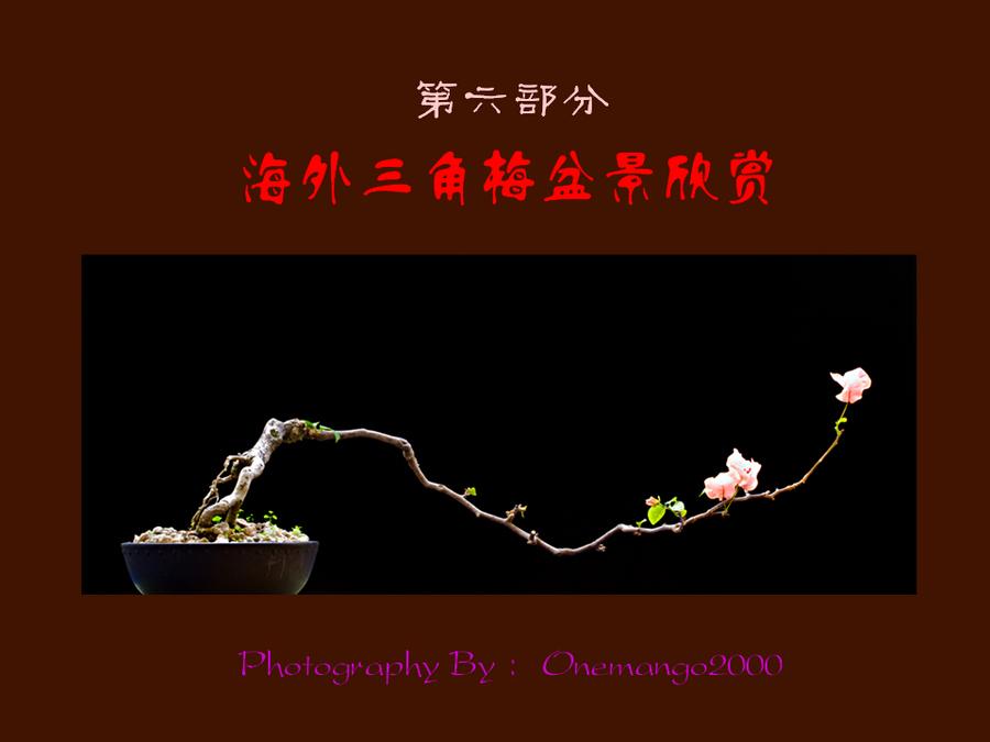 三角梅的欣赏与家庭种植 (126).jpg