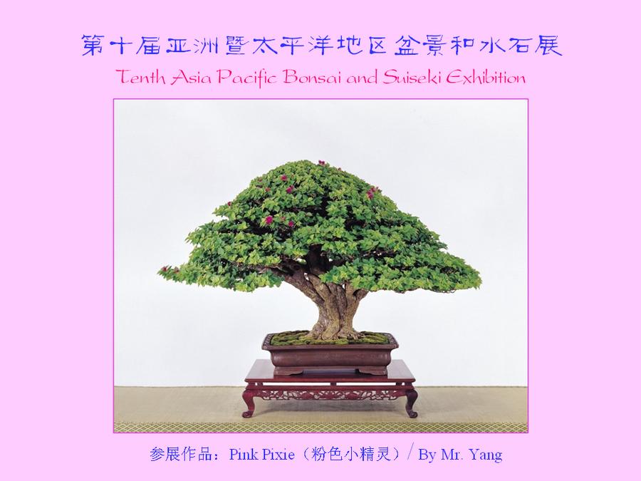 三角梅的欣赏与家庭种植 (164).jpg