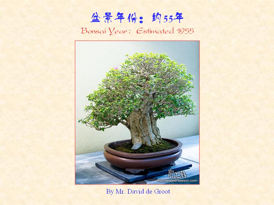 三角梅的欣赏与家庭种植 (165).jpg