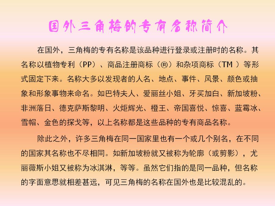 三角梅的欣赏与家庭种植 (13).jpg