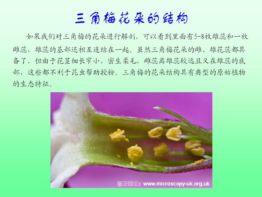 三角梅的欣赏与家庭种植 (31).jpg