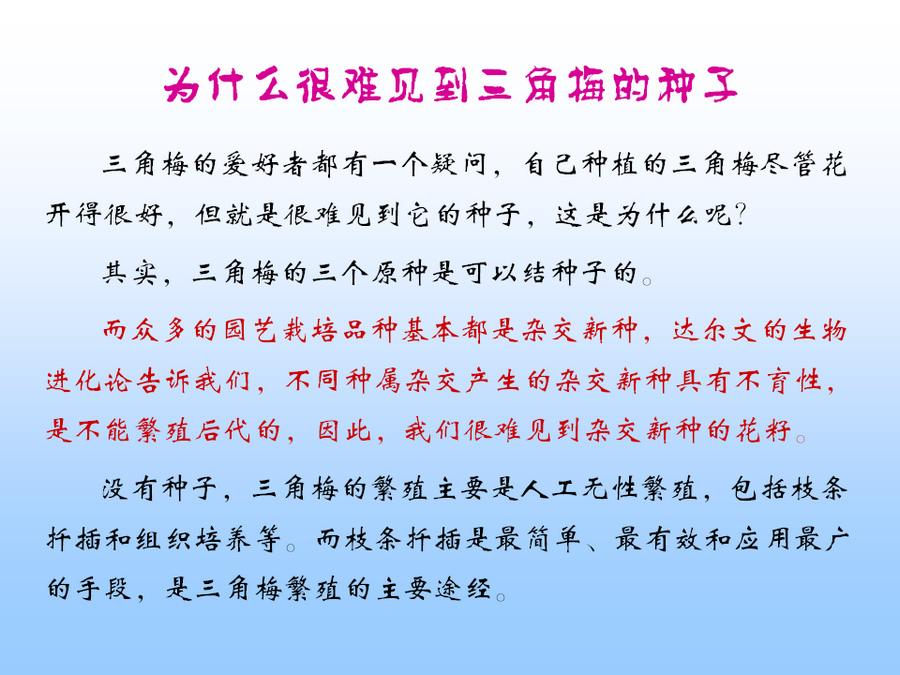 三角梅的欣赏与家庭种植 (39).jpg