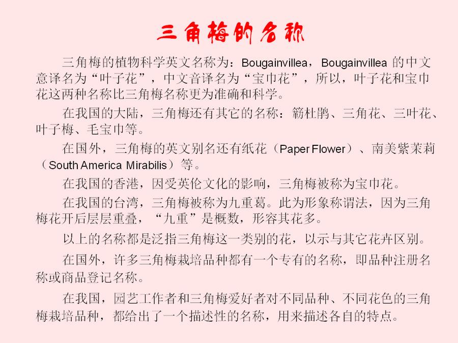 三角梅的欣赏与家庭种植 (3).jpg