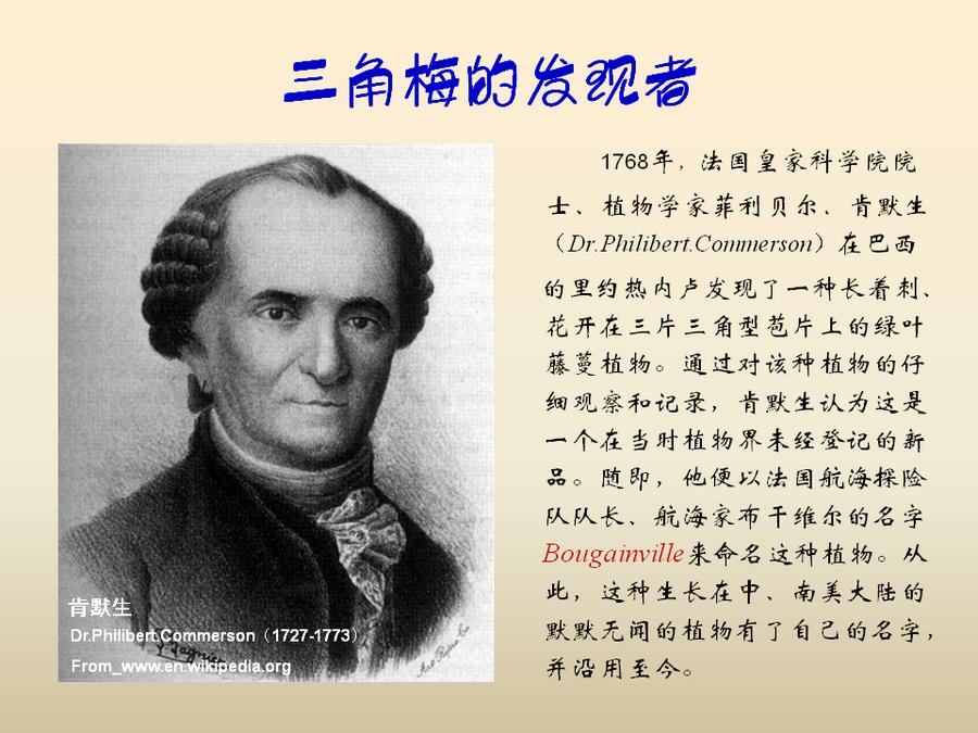 三角梅的欣赏与家庭种植 (7).jpg