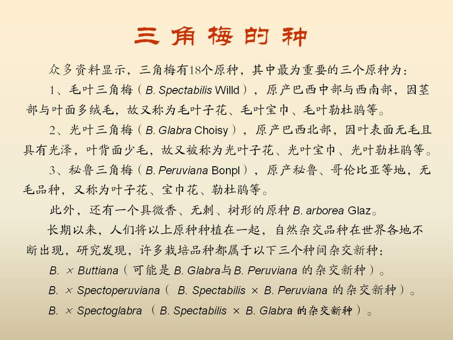 三角梅的欣赏与家庭种植 (11).jpg