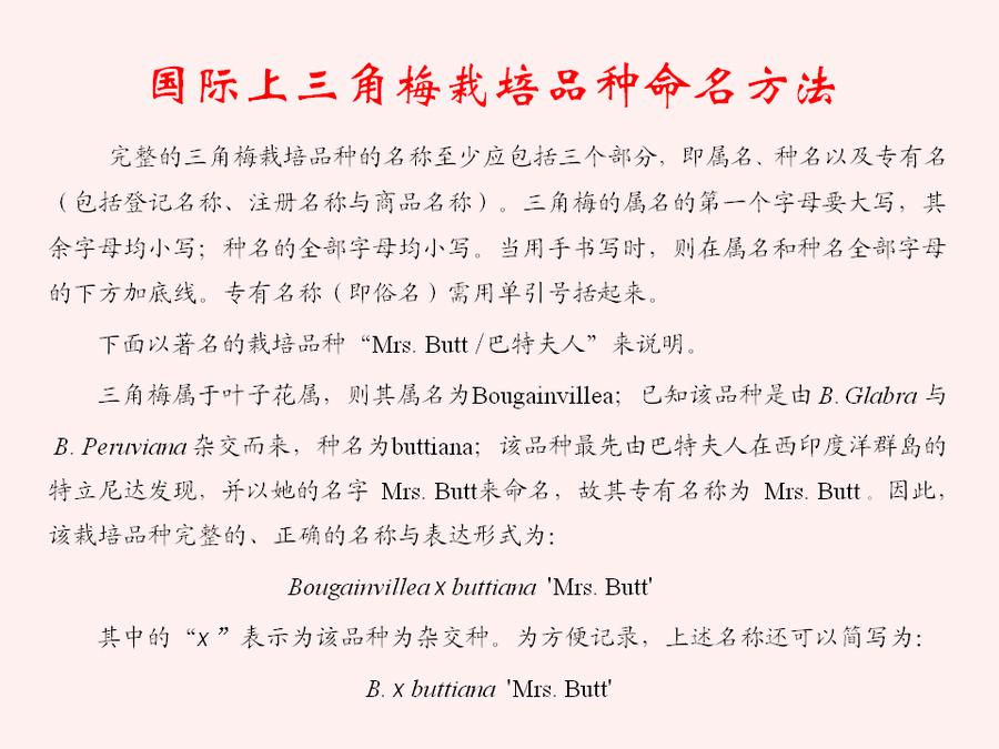 三角梅的欣赏与家庭种植 (12).jpg