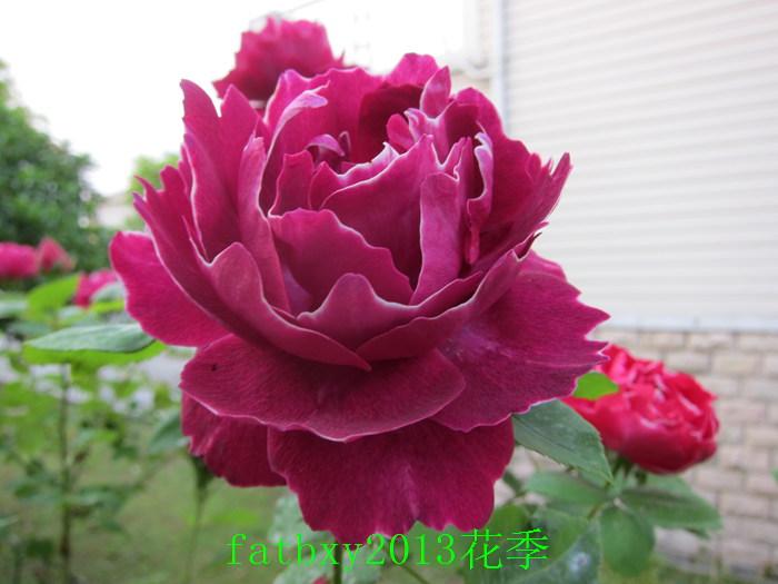 玉带紫袍.jpg