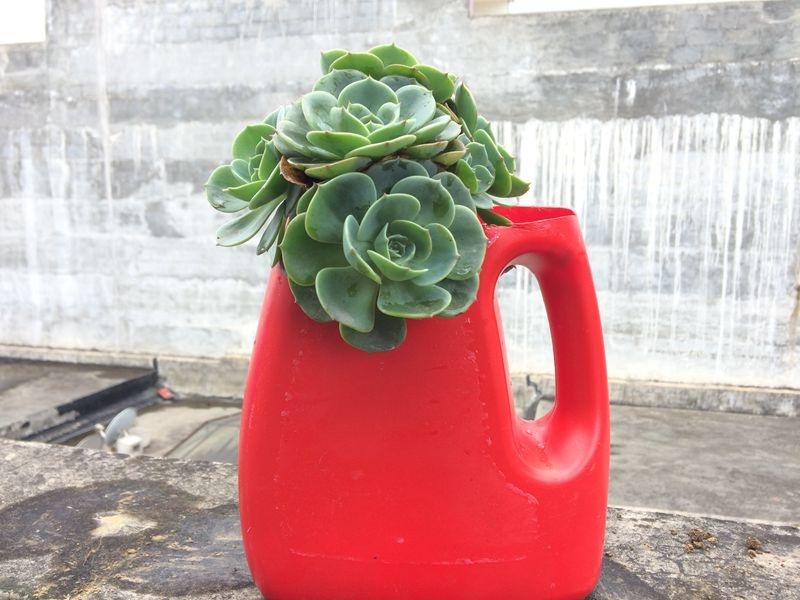 前世:洗衣液瓶子;今生:美丽的花盆