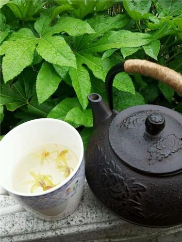石斛茶.jpg