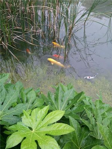 外池鱼1.jpg