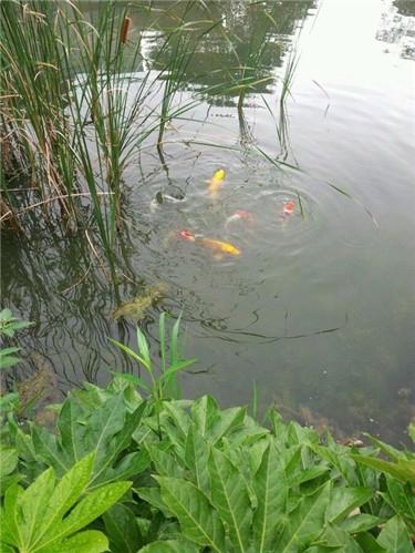外池鱼2.jpg