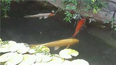 池鱼3.JPG