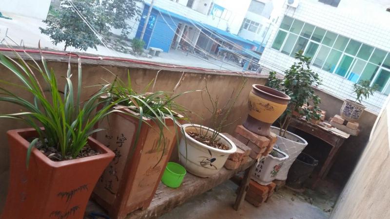 这是兰草和茶花,一棵白十八小苗挂了