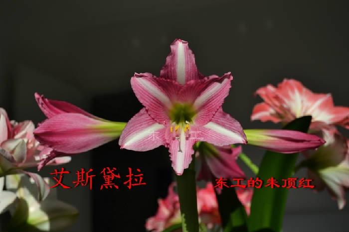 鑹炬柉榛涙媺.JPG