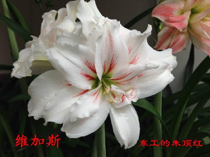鏃ユ湵鍏噸.JPG