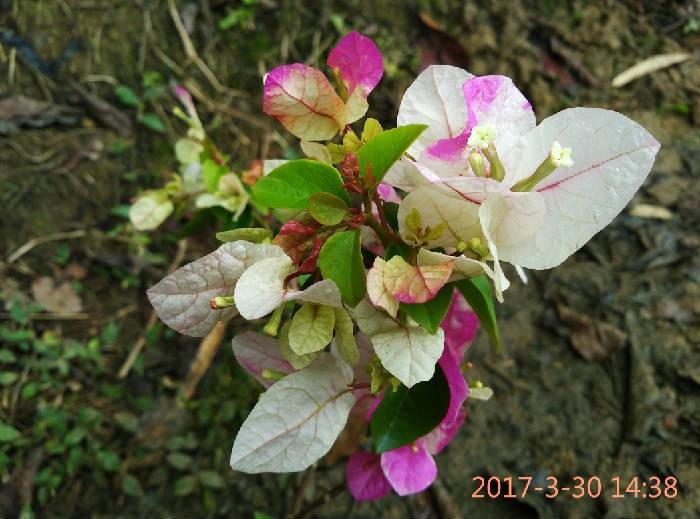 IMG_20170330_143852.jpg
