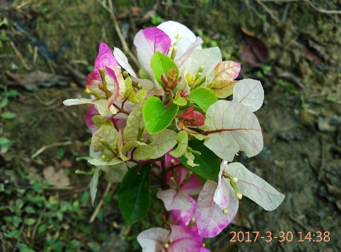 IMG_20170330_143826.jpg