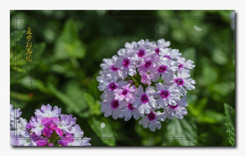 花园3.jpg