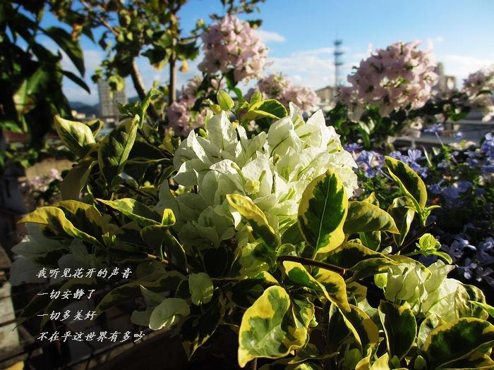 IMG_8532.jpg