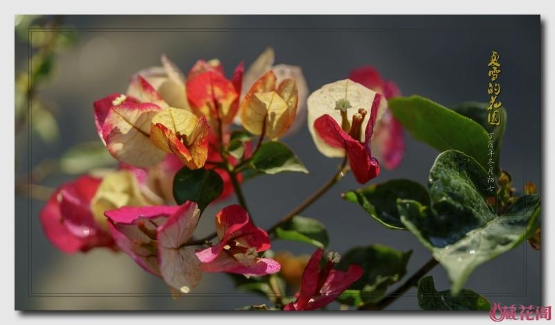 花园8.jpg
