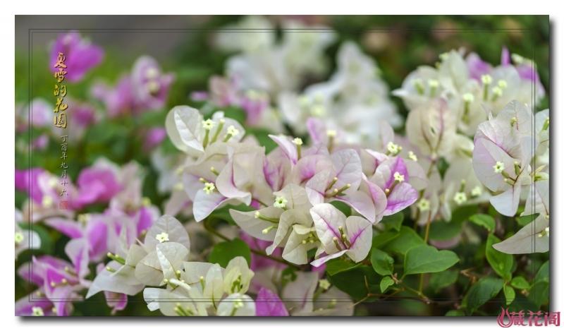 花园11.jpg