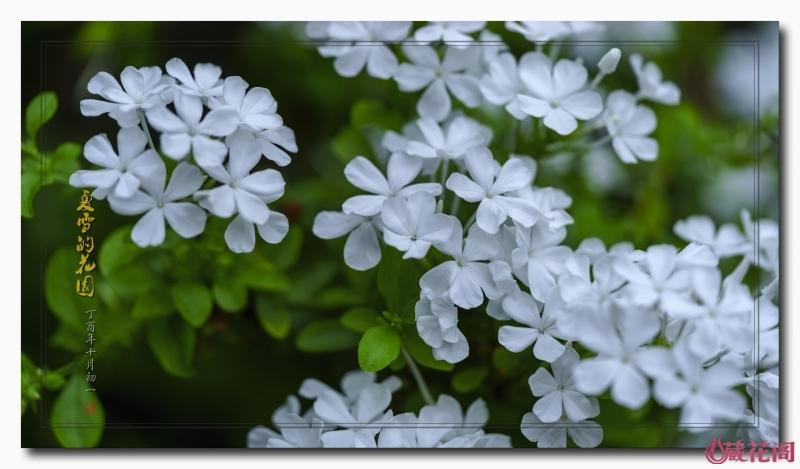 花园12.jpg