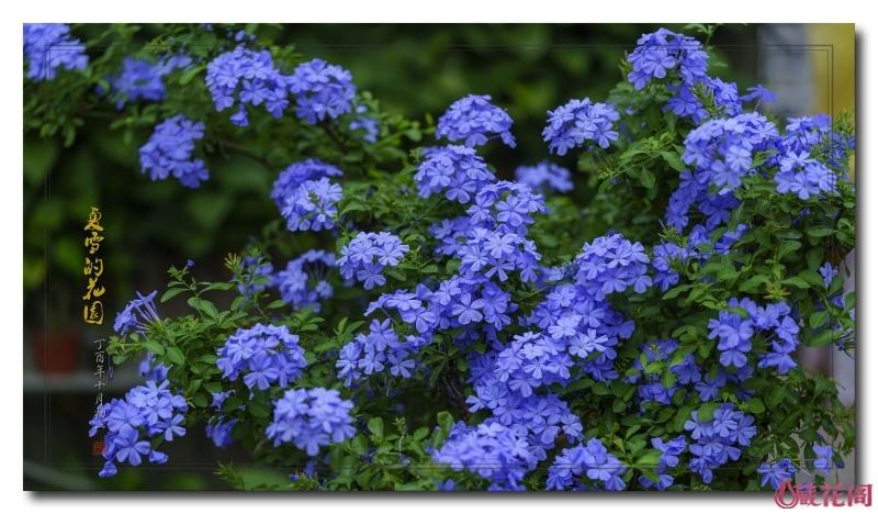 花园14.jpg