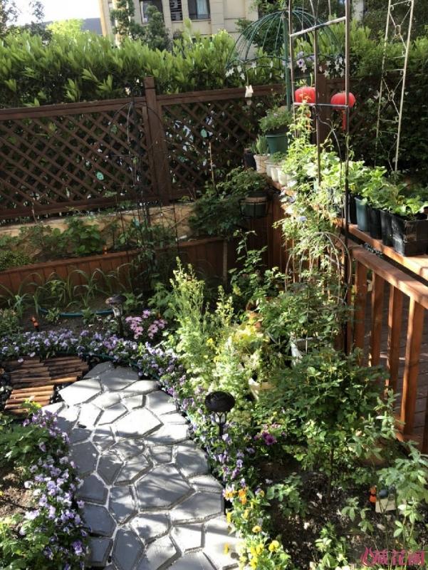 半园的造型处种一颗野铁配盆栽的月季