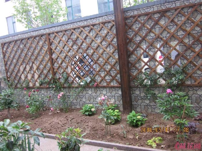 靠南墙的地方,栽了3棵藤月,4棵无尽夏,6棵矾根,一棵芍药,2棵玉簪,一棵桂花,7棵耧斗菜,还有百合,灌  ...