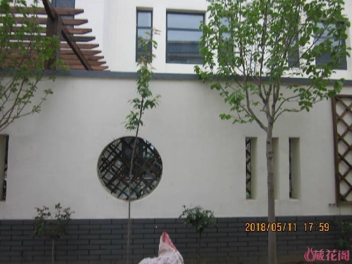 门外绿化带,栽了2棵黄玉兰、2棵樱花、2棵树月、一棵藤月