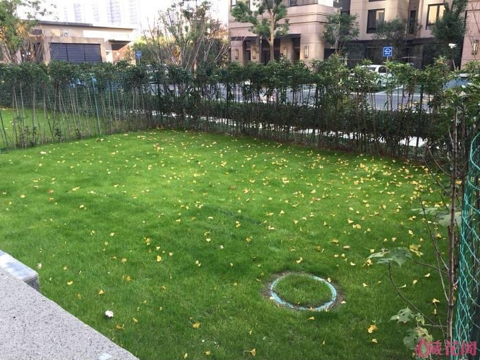 院子方正,长9米,宽7米