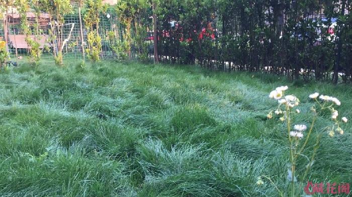再来一张,一个春季没打理的庭院草
