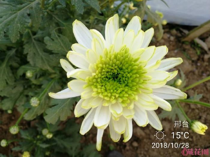 IMG_20181028_165354.jpg