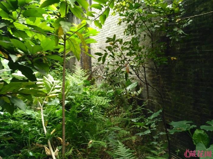 杂草丛生的园地1